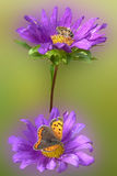 Purple flower with insects. Purple flower with butterfly and bee Royalty Free Stock Photos