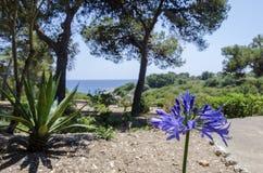 Purple flower in island Majorca, Spain. Royalty Free Stock Images