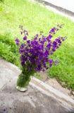 Purple flower in jar. Purple flower with jar is in the yard Royalty Free Stock Photo