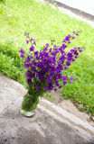 Purple flower in jar Stock Images