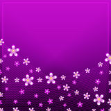 Purple flower light card Royalty Free Stock Photos