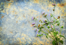 Purple Flower. Little purple flower blossoms on zinc the old style vintage, and empty space for text Stock Images