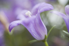 Purple Flower Macro Stock Photos