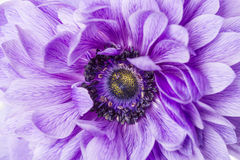 Purple flower macro Stock Image