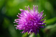 Purple Flower in Macro Lens Photography Royalty Free Stock Photos