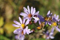 Purple Flower Macro Shot Shallow Focus Stock Photos