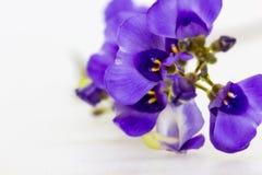 Purple Flower. Makro photo on white backround Royalty Free Stock Photography