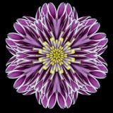 Purple Flower Mandala Kaleidoscope Isolated on Black. Purple Flower Mandala. Kaleidoscopic design Isolated on Black Background. Mirrored pattern royalty free stock photos