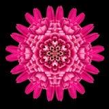 Purple Flower Mandala Kaleidoscope Isolated on Black Stock Photo