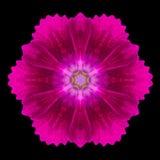 Purple Flower Mandala Kaleidoscope Isolated on Black Royalty Free Stock Photo