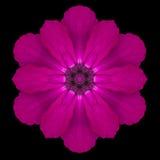 Purple Flower Mandala Kaleidoscope Isolated on Black Stock Photography