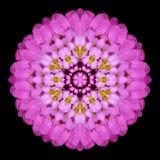 Purple Flower Mandala Kaleidoscope Isolated on Black Stock Photos
