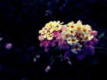 Purple flower. Nature Royalty Free Stock Photo