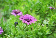 Purple flower in the nature royalty free stock photography