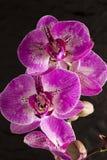 Purple flower Royalty Free Stock Photos