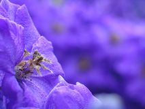 Purple flower in outdoor garden Stock Images