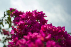 Purple flower. Purple paper flowers with greenish bushes stock photography