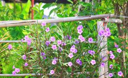 Purple flower. In the park Stock Photography
