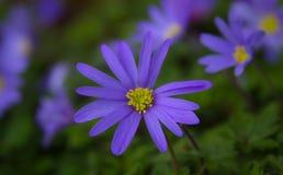 Purple flower patch stock photo