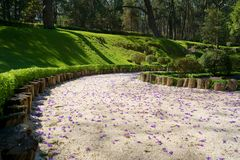 Purple flower petals in the Japanese Garden of the Colomos forest. stock photos