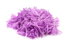 Purple flower petals Stock Photos