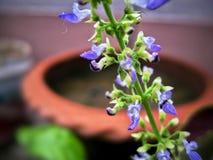 The Purple Flower royalty free stock photos