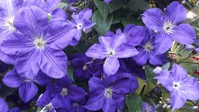 Purple flower. Picture of purple flower royalty free stock photo