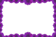 Purple Flower Picture Frame isolated on white background Royalty Free Stock Photos