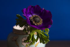 Purple Flower Is in a Pink and Green Vase Royalty Free Stock Images
