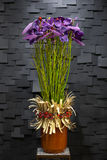 Purple flower in a pot Royalty Free Stock Photos