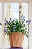 Purple flower pot Stock Images