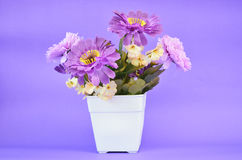 Purple flower in pot Stock Image