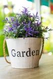 Purple flower pots Stock Photography