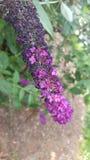 Purple flower. A pretty purple flower Royalty Free Stock Photography