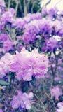 Purple flower. Close up grass Waterford ireland Stock Photos
