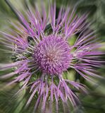Purple flower. In the forest royalty free stock photos