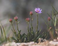 Purple flower on rock. Selective focus. Toned stock photos