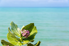 Purple Flower and Sea Stock Photo