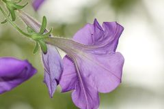 Purple Flower Selective Focus Photo stock images