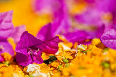 Purple flower with shallow dept of field. With yellow flowers stock image