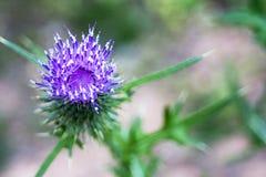 Purple Flower. In sharp focus against blurry background stock photo