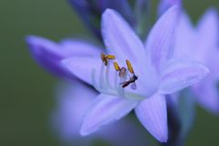 Purple flower with small bee. Stock Photos