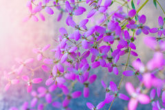 Purple flower. Solf and select focus for background stock photos