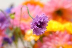 Purple flower on a stem royalty free stock photo