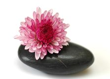 Purple flower on stone. Simple icon for spa concept Stock Photos