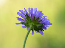 Purple flower. Summer time with purple flower Stock Photography