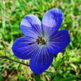 Purple flower in the sunshine. A purple flower gazing at the sun Stock Photography