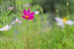 Purple flower thrive Stock Photo