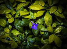 Purple flower on top of bright yellow leaves stock photos