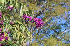 Purple flower tree in a sunny day royalty free stock photography